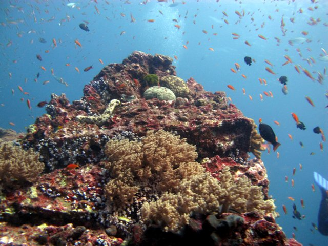 Diving in the Andaman Sea